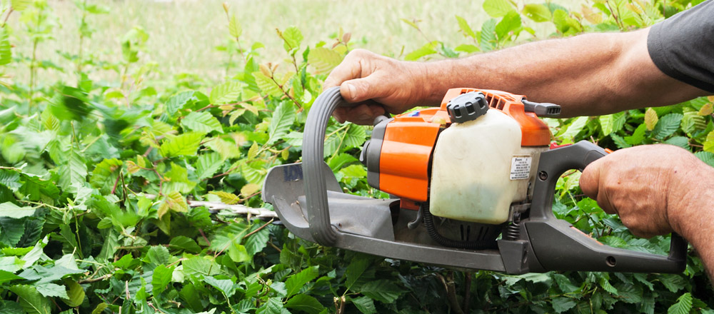 Berkshire hedge cutting service in Newbury, Hungerford, Kintbury