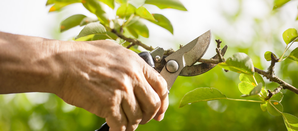 Pruning flowers, trees, shrubs in Newbury, Berkshire